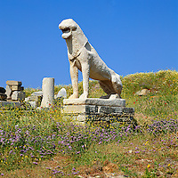 Greece, Cyclades, Island Delos: important mythological, historical and archaeological site, birthplace of Apollo and Artemis - Terrace of the Lions, the island is UNESCO World Cultural Heritage | Griechenland, Kykladen, Insel Delos: antike, heilige Staette, beruehmt durch das Apollonheiligtum - Loewenterrasse, die Insel ist UNESCO Weltkulturerbe