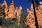 View of Hoodoos from trail down into Bryce Canyon, Bryce Canyon National Park, UTAH
