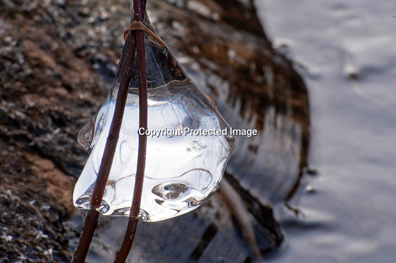 Ice Tear Drop