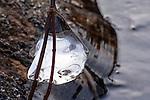 Ice Tear Drop