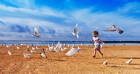 Child chasing birds on beach in Waikiki, Honolulu, Hawaii..