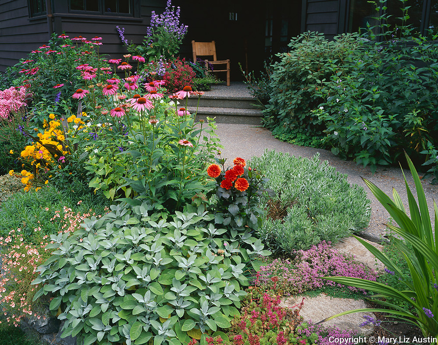 Vashon Island, WA<br /> Summer garden bed borders a walkway leading to a secluded porch