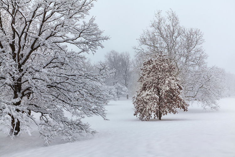 Winter scene and tree patterns at The Morton Arboretum; DuPage County, IL