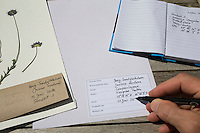 Herbarbogen wird beschriftet. Botanik, Botanisieren, botany, Herbar, herbaria, Herbarien, herbarisieren, herbier, Pflanzenbestimmung, Pflanzenherbar