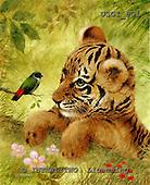 GIORDANO, REALISTIC ANIMALS, REALISTISCHE TIERE, ANIMALES REALISTICOS, paintings+++++,USGI501,#A# tiger