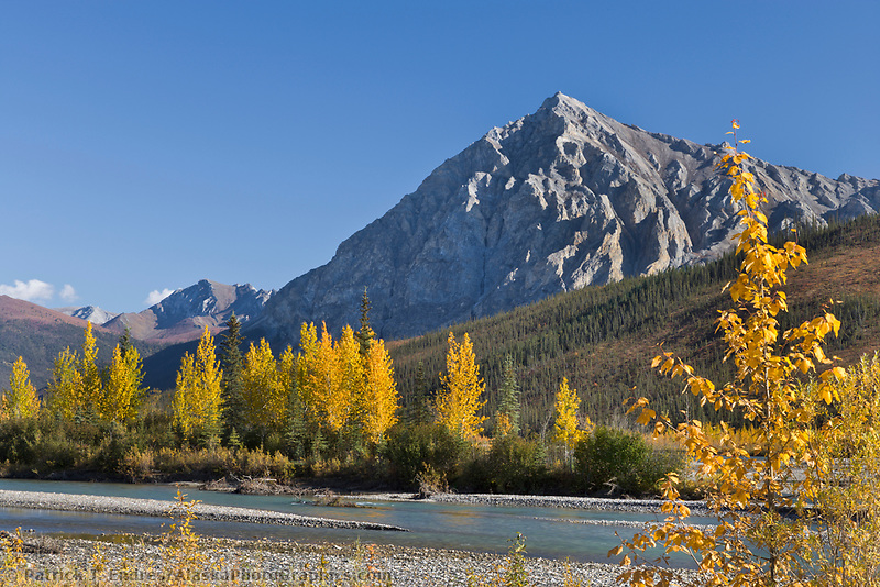 Mount Dillon and Balsam Poplar trees along the Koyukuk River in Arctic Alaska.