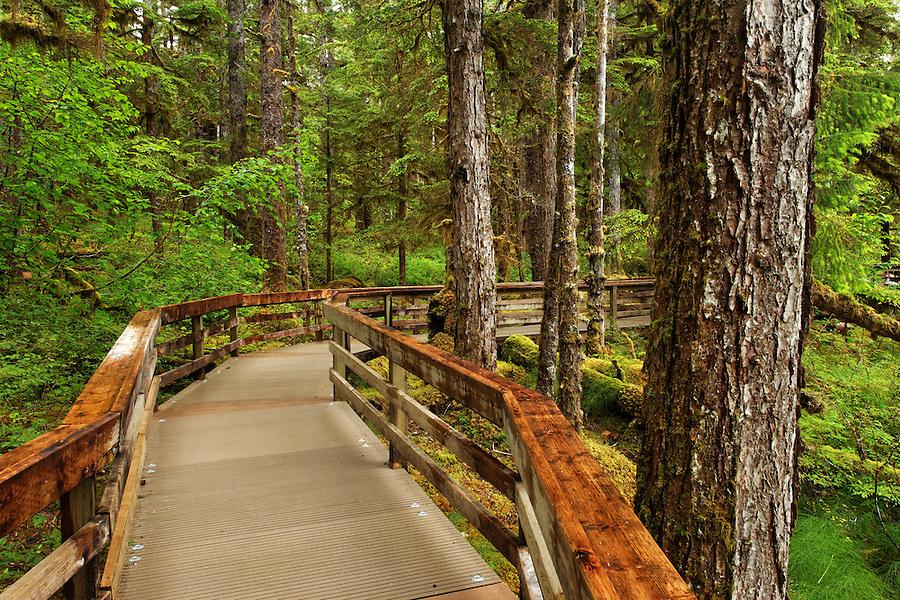 Forest Loop Trail, Bartlett Cove, Glacier Bay National Park, Alaska, USA