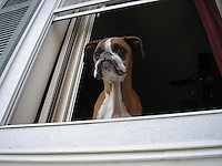 This boxer in a 2nd floor window is staring right past us to his young owner who was the only person we took with us to specifically search one house. She pleaded with us to go.<br />