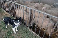 - holiday farm Cascina Raflazz in Paroldo (Cuneo),  ...the sheepfold....- agriturismo Cascina Raflazz a Paroldo (Cuneo), l'ovile