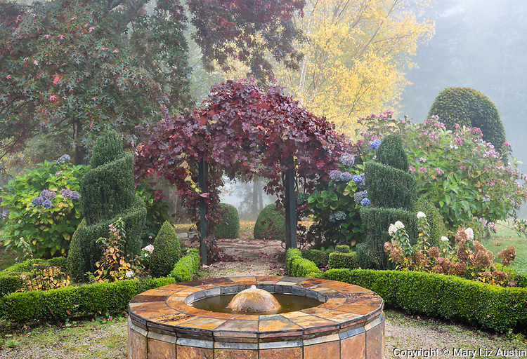 Vashon Island, Washington: Walkway with slate water feature and grape vine arbor also featuring boxwood and hydrangeas in fall.