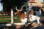 A woman riding on a Texas Longhorn bull at the Stockyards in Fort Worth Texas