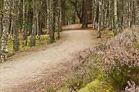 The Spey Way near Aviemore, Cairngorm National Park, Scottish Highlands, Uk