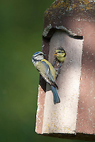 Vögel am Nistkasten