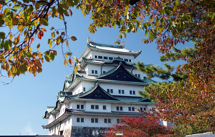 Nagoya Castle framed by autumn leaves. A popular place to visit for tourists. The original castle was destroyed by American bombing raids in World War Two. In the 1950's this concrete construction was built in the place of the original, which contains a museum of the castle's history and its place in Japan.