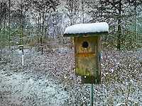 Palm Pre photo of snow-covered bluebird nesting box in county park.
