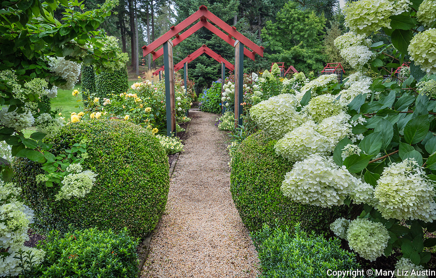 Vashon Island, WA: Pathway leads through a perennial garden under colorful pergolas featuring hydrangeas, roses and boxwood in Froggsong garden in summer