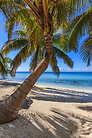 Palm trees and white sand beach on Laughing Brid Caye National Park, is a small isle 11 miles off the coast of Belize
