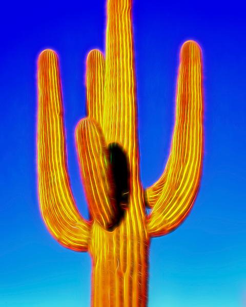 Saguaro #29