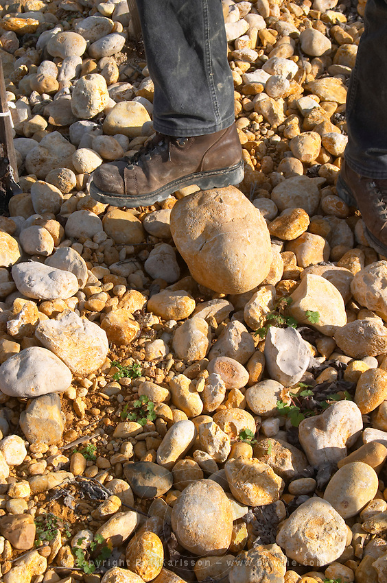 "Frédéric Pourtalié (Domaine Montcalmes) with big rocks called ""tetes de mort"" head of dead people or skulls. Vineyard of Domaine Saint Sylvestre in Puechabon. Terrasses de Larzac. Languedoc. Terroir soil. Owner winemaker. France. Europe. Vineyard. Soil with stones rocks. Galets."