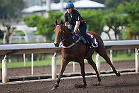 SHA TIN,HONG KONG-APRIL 25: Buffering ,trained by Robert Heathcote,exercises in preparation for the Chairman's Sprint Prize at Sha Tin Racecourse on April 25,2016 in Sha Tin,New Territories,Hong Kong (Photo by Kaz Ishida/Eclipse Sportswire/Getty Images)