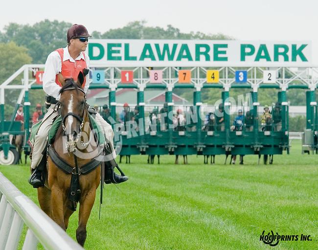 Artie's Flight winning at Delaware Park on 8/20/14