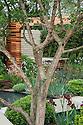 Multi-stemmed Strawberry tree (Arbutus unedo). Homebase Teenage Cancer Trust Garden, designed by Joe Swift, RHS Chelsea Flower Show 2012.