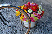 An enamel bucket on the kitchen floor contains a variety of multi-coloured dahlias picked from the garden