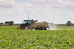 A truck sprays pesticides on a green bean crop.