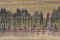 Knicklandschaft in Schleswig Holstein: EUROPA, DEUTSCHLAND, SCHLESWIG-HOLSTEIN, MOELLN (EUROPE, GERMANY), 26.02.2012: Knicklandschaft in Schleswig Holstein