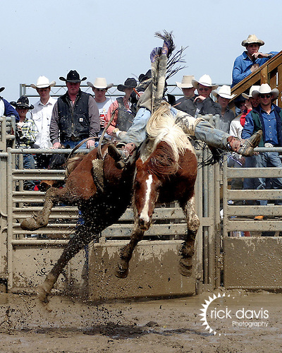 Colorado State High School Rodeo Association bronc riders compete in a weekend rodeo series.