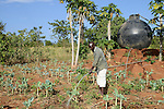 KENYA, Mount Kenya East, Region South Ngariama , farmer irrigates Khat shrubs and vegetable plants, Khat is traded as chewing drug  / KENIA, Farmer bewaessert Khat Straeucher und Gemuese Pflanzen, Khat wird als Kaudroge illegal gehandelt
