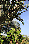 Israel, Carmel Coastal Plain. Cacti at Bustan Hacarmel tropical tree garden