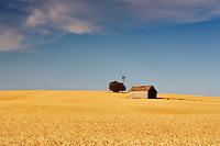 Abandoned historic house in wheat field. The Palouse. Washington