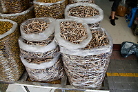 Plastic bags full of dried seahorese for sale at a medicine shop in Guangzhou, China. seahorses are dried for use as aphrodisiacs in Chinese medecine.