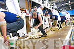 The action at this year's All Ireland and International Sheep Shearing Championship 2013.