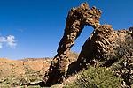 Ladies slipper, Mount Teide, Parque Nacional de Las Cañadas del Teide.