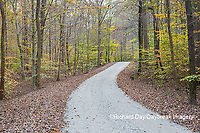 63895-14417 Road in fall at LaRue-Pine Hills in Shawnee National Forest, IL