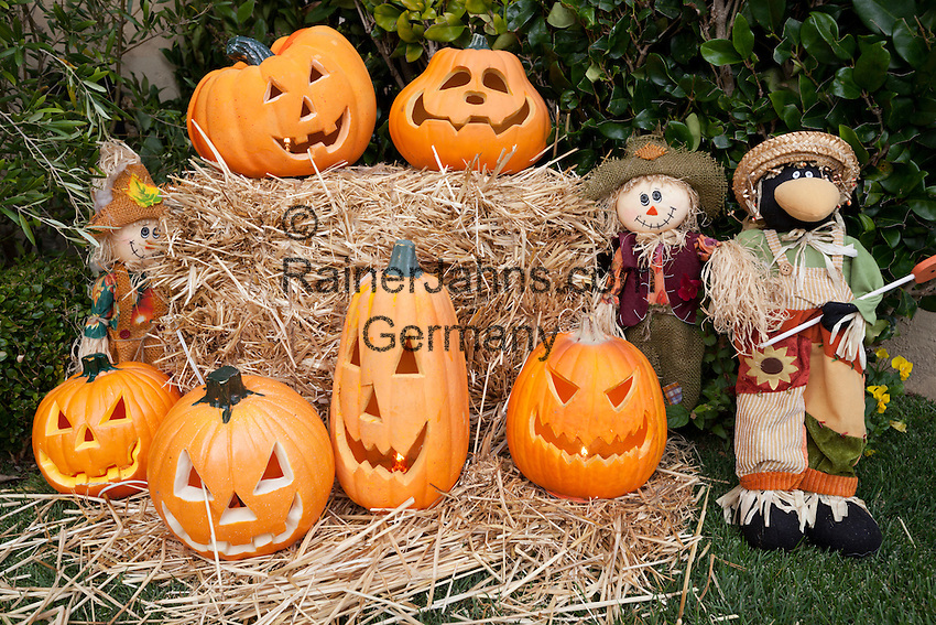 United States of America, California, San Francisco: Halloween Pumpkin display | Vereinigte Staaten von Amerika, Kalifornien, San Francisco: Halloween Dekoration