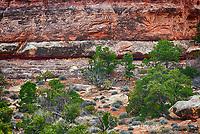 March 14, 2018: Juniper and pinyon pines dot the canyon floors inThe Needles District, Canyonlands National Park, Utah.