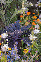 Kale 'Redbor', Leucanthemum, Calendula, Ammi, vegetables and flowers in garden combination all in one garden