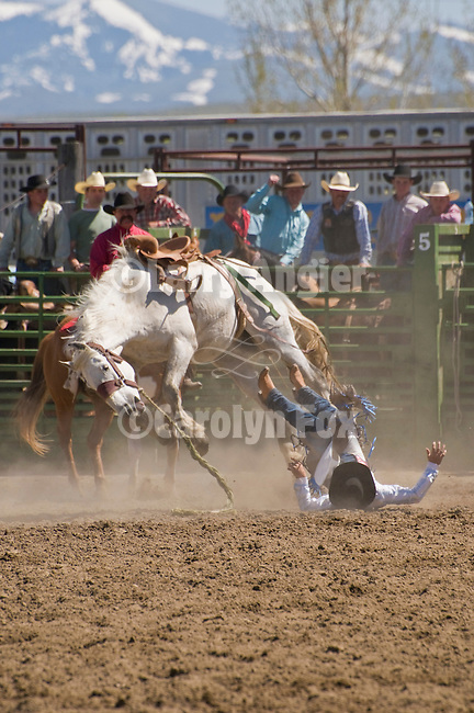 A cowboy hits the ground after being bucked off a saddle bronc, Jordan Valley Big Loop Rodeo,