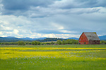 Idaho, North Central, Peirce. A barn scene in spring.