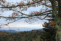 Stock photo: Tree branch with fall colored leaves and smoky hills covered with pine trees seen behind.