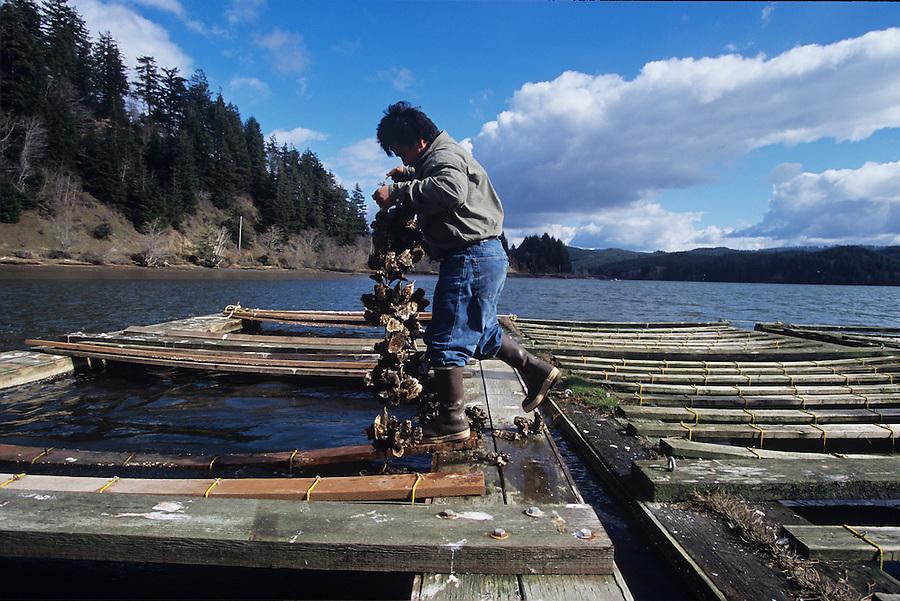 Newport Oregon, Oyster farming