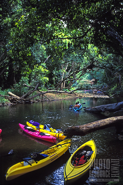 Couple paddles beyond tethered kayaks left by kayakers who are on a hike to Secret Falls, Wailua River State Park, Kauai