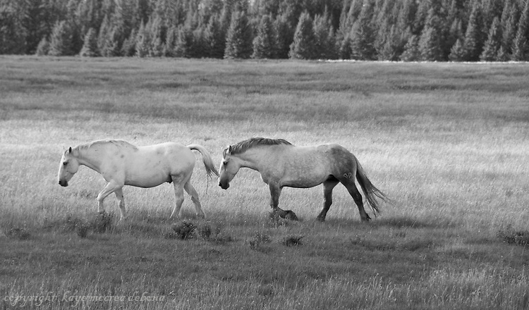 Black and White Images of Horses and Landscape with horses