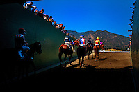 Horses are lead to the track for the 2012 Santa Anita Derby at Santa Anita Park in Arcadia California on April 7, 2012.