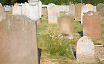Old Victorian weathered gravestones in churchyard of St Margaret, Cley next the Sea, Norfolk, England
