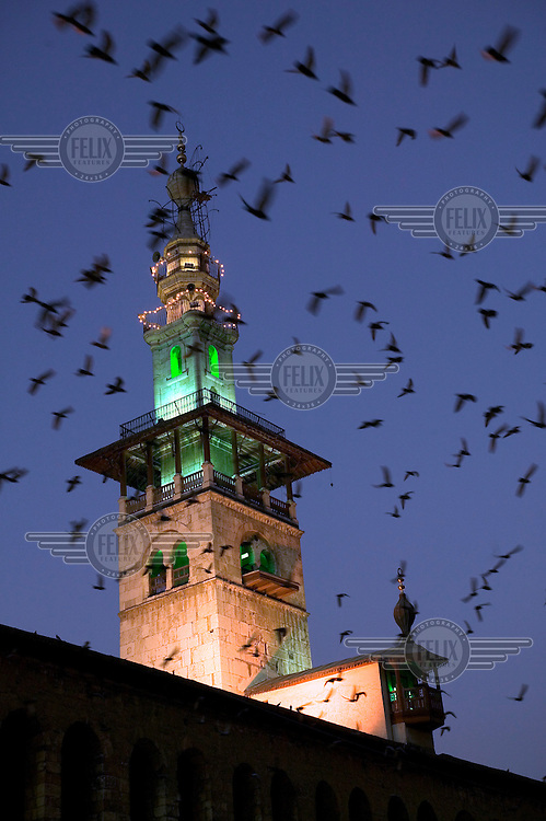 Pigeons flying over the Arus Minaret (The Minaret of the Bride) at Omayyad Mosque at night.