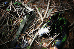 A pair of shoes, belt and sunglasses are among the belongings lying amongst the undergrowth in Aokigahara Jukai, better known as the Mt. Fuji suicide forest, which is located at the base of Japan's famed mountain west of Tokyo, Japan. ..